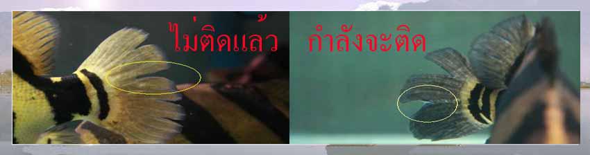 547-20091018011925