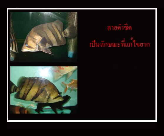 547-20091018014119