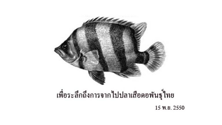 ปลาเสือตอพันธ์ุไทย
