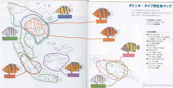 ปลาเสือตอแบ่งตามถิ่นกำเนิด