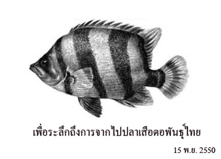 ภาพวาดปลาเสือตอไทย