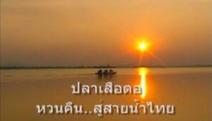 ปาเสือตอ หวนคืนสู่สายน้ำไทย