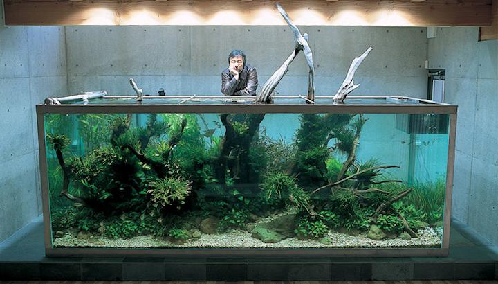 ตู้ปลาธรรมชาติ โดย Takashi-Amano